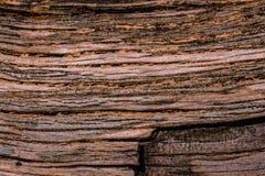 Textura de un árbol viejo lanzado en tierra Imagenes de archivo