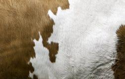 Textura de una capa de la vaca Imagenes de archivo