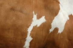 Textura de una capa de la vaca Fotografía de archivo libre de regalías