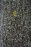 Textura de una corteza de un árbol, fondo fotografía de archivo
