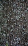 Textura de una corteza de un árbol, fondo imagenes de archivo