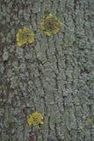 Textura de una corteza de un árbol, fondo imágenes de archivo libres de regalías