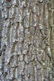 Textura de una corteza de un árbol, fondo fotos de archivo libres de regalías