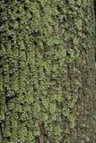 Textura de una corteza de un árbol, fondo imagen de archivo