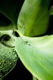 Textura de una hoja con gotas del agua Imagen de archivo
