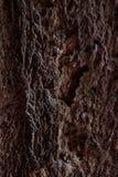 Textura de una piedra Imagenes de archivo