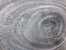 Textura de viejo Gray Growth Ring Tree fotos de archivo