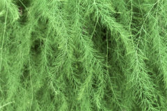 Textura decorativa da pele-árvore Foto de Stock