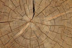Textura del árbol Foto de archivo libre de regalías