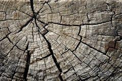Textura del árbol Foto de archivo