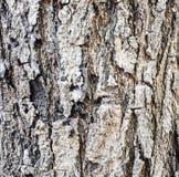 Textura del árbol Fotos de archivo