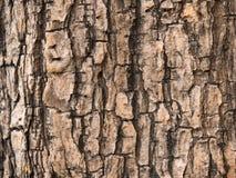 Textura del árbol Imágenes de archivo libres de regalías