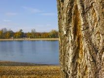Textura del árbol al lado del lago Foto de archivo libre de regalías