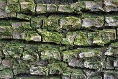 Textura del árbol con color verde y líneas rectas Imagen de archivo