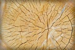 Textura del árbol cortado Fotos de archivo libres de regalías