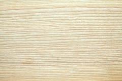 Textura del árbol de ceniza Fotografía de archivo