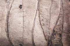 textura del árbol de coco Fotos de archivo libres de regalías