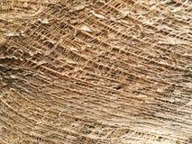 textura del árbol de coco Fotos de archivo