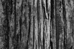 Textura del árbol de corteza Fotografía de archivo libre de regalías