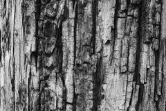 Textura del árbol de corteza Foto de archivo