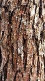 Textura del árbol de corteza de la pera Imagen de archivo