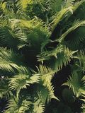 Textura del árbol del helecho Imagen de archivo