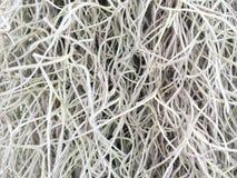 Textura del árbol del hilo Fotos de archivo
