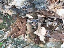 Textura del árbol del tocón Fotos de archivo
