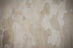 Textura del árbol plano Imagen de archivo libre de regalías
