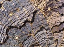 Textura del ala de la mariposa Imágenes de archivo libres de regalías