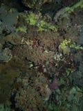 Textura del arrecife de coral imagenes de archivo