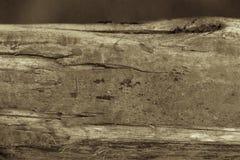 Textura del baronet Imagenes de archivo