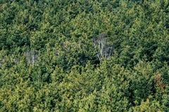Textura del bosque Fotos de archivo libres de regalías