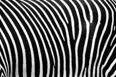 Textura del BW de la cebra Foto de archivo libre de regalías