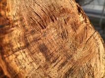 Textura del cáñamo aserrado en un árbol verde imagen de archivo libre de regalías