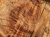 Textura del cáñamo aserrado en un árbol verde imagenes de archivo