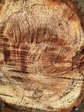 Textura del cáñamo aserrado en un árbol verde fotografía de archivo libre de regalías