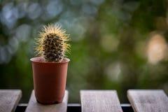 Textura del cactus Imagenes de archivo