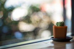 Textura del cactus Foto de archivo libre de regalías