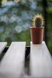 Textura del cactus Fotos de archivo libres de regalías