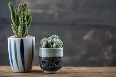 Textura del cactus Fotos de archivo