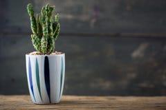 Textura del cactus Foto de archivo