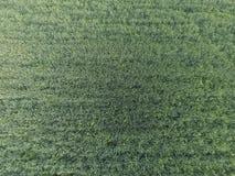 Textura del campo de trigo Fondo del trigo verde joven en el campo Foto del quadrocopter Foto aérea del campo de trigo Foto de archivo