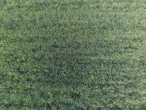 Textura del campo de trigo Fondo del trigo verde joven en el campo Foto del quadrocopter Foto aérea del campo de trigo Fotografía de archivo