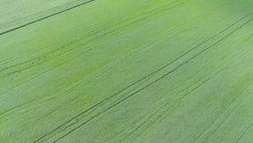 Textura del campo de trigo Fondo del trigo verde joven en el campo Foto del quadrocopter Foto aérea del Imagen de archivo libre de regalías
