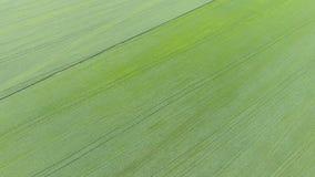 Textura del campo de trigo Fondo del trigo verde joven en el campo Foto del quadrocopter Foto aérea del Fotos de archivo