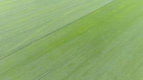 Textura del campo de trigo Fondo del trigo verde joven en el campo Foto del quadrocopter Foto aérea del campo de trigo Imagenes de archivo