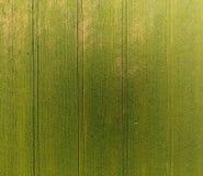 Textura del campo de trigo Fondo del trigo verde joven en el campo Foto del quadrocopter Foto aérea del campo de trigo Imágenes de archivo libres de regalías