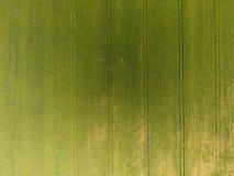 Textura del campo de trigo Fondo del trigo verde joven en el campo Foto del quadrocopter Foto aérea del campo de trigo Imagen de archivo libre de regalías