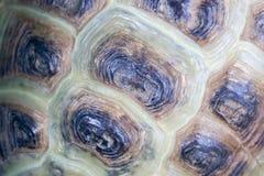 Textura del caparazón de la tortuga foto de archivo libre de regalías